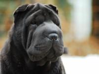 В Запорожской области ребенка покусала соседская собака
