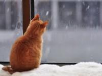 Новая волна непогоды: Запорожскую область заметет снегом
