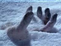 В запорожском селе обнаружили тело замерзшего мужчины