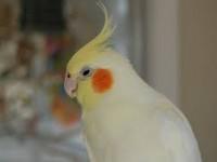 Житель Запорожской области украл говорящего попугая