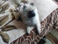 Таких щенков на весь город всего 5: в Запорожье похитили редкую собаку