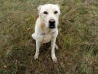 Верный пес, прождавший хозяев возле дороги трое суток, снова ищет дом