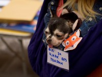«Концлагерь для животных»: запорожцы пикетировали цирк (Фото)