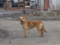 В Запорожье живодер отрезал собаке голову и собирался ее съесть