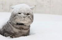 Зима не отступает: в Запорожье ожидаются сильные морозы с метелями