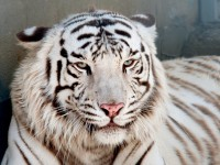 В зоопарке под Запорожьем появилось редкое животное