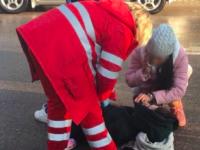 В Запорожье водитель «Киа» сбила на пешеходном переходе двух студенток