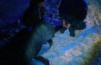 За ночь в Запорожье задержали две банды кабельных воров, вооруженных пистолетом и гранатой
