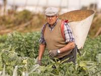 Цитрусовые заработки: запорожец поделился опытом работы на полях Испании