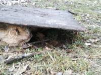 В Запорожье объявился серийный живодер, жестоко расправляющийся с котами