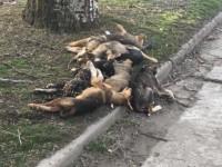 На запорожском курорте потравили собак, бросив трупы на обочине