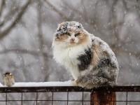 На Запорожскую область снова надвигается циклон – погода ухудшится
