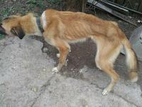 «Кожа да кости»: запорожская семья морит голодом дворовых собак