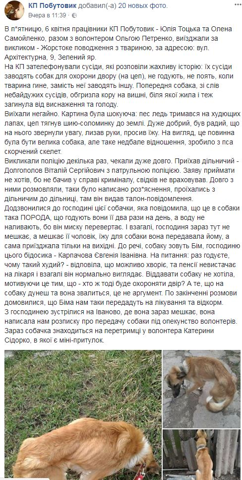 12_04_sobak1