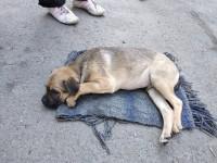 Запорожцы перечислили на спасение щенка, которого хозяйка выбросила из окна, более 11 тысяч