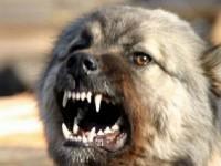 Под Запорожьем собака без намордника укусила прохожую
