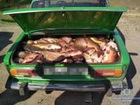 Двое браконьеров пытались проскочить блокпост с полным багажником рыбы