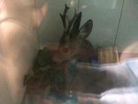 Умер олень, который врезался в машину в спальном районе Запорожья