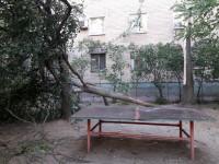 В Запорожской области рядом с детской площадкой рухнуло дерево