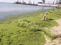 На запорожском курорте берег покрылся слоем водорослей (Фото)