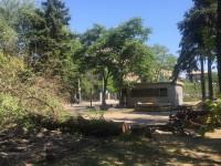 На проспекте Маяковского начали вырубку деревьев: первыми спилили ели (Фото)