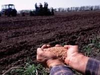 Запорожские аграрии остановили посевную из-за засухи