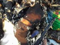 В Запорожье заживо сожгли четверых щенков