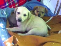 В Запорожье ищут дом для щенков, дом которых сожгли вместе с собратьями