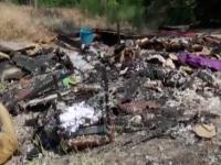 Шансы наказать живодеров, которые заживо сожгли щенков, минимальны (Видео)