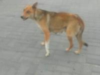В Запорожье напротив мэрии бродячая собака укусила ребенка