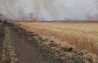 Фермеры несут убытки: спасатели ликвидировали два крупных возгорания на полях с пшеницей