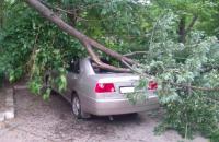 В Запорожской области упавшее дерево повредило легковушку
