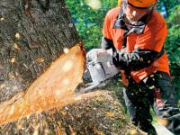 На окраине Запорожья ради автостоянки вырубят более сотни деревьев