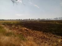 Пожар на Хортице тушили 17 спасателей
