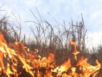 В Запорожской области из-за пожара чуть не подрались соседи