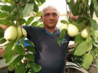 Жуй бананы, ешь кокосы: житель запорожского села выращивает тропические фрукты