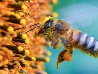Под Запорожьем массово гибнут пчелы: пасечники винят фермеров