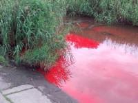 Речка возле автовокзала в Запорожье окрасилась в ярко-красный (Фото)