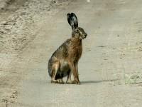 Запорожский фотограф устроил фотосессию диким зайцам на заповедном острове