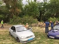 Под Запорожьем «черные лесорубы» пилили лес под видом обрезки аварийных деревьев