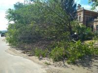 На Правом берегу из-за упавшего дерева без света осталась больница, на Хортице – профилакторий