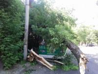 На бульваре Шевченко дерево рухнуло на крышу троллейбуса (Фото)