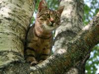 На Бабурке волонтеры спасли кота, который провел на дереве пять суток