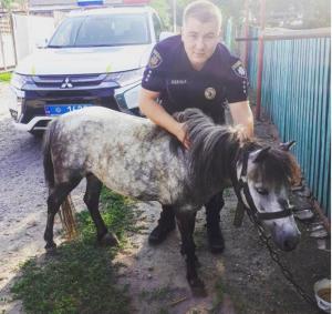 На запорожском курорте потерялся пони по кличке Феррари