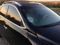 В крови пешехода, погибшего под колесами авто Гришина, нашли алкоголь: правоохранители продолжают хранить молчание