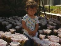 В память о жене: у жителя Запорожской области расцвели во дворе более 500 кактусов (Фото)