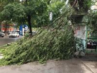 В центре Запорожья упавшее перед киоском дерево перегородило дорогу (Фото)