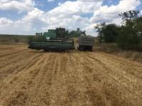 Под Запорожьем неизвестные самовольно засеяли поле пшеницей