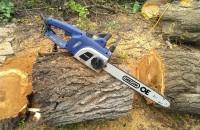 В Запорожье на Металлургов удалят несколько десятков деревьев