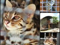В зоопарке под Запорожьем поселился красивый, но плохо приручаемый хищник